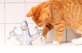kitty playing with faucet