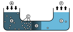 A - Pressure is applied B/C - Contaminated water D - Membrane E - Purified Water F - Distributed