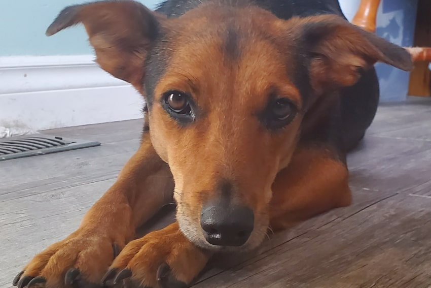 Out of This World Plumbing Saves Dog From Barbados